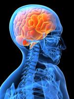 Agentur, Marketing, Training, Beratung, Gehirn